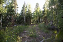Homesite in Ptarmigan Meadows